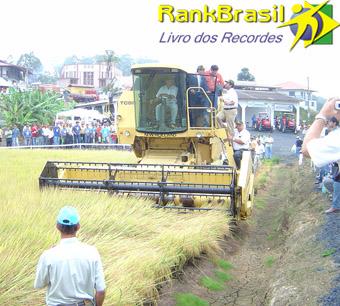 Maior produção de arroz irrigado por hectare
