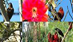 País com maior biodiversidade do mundo