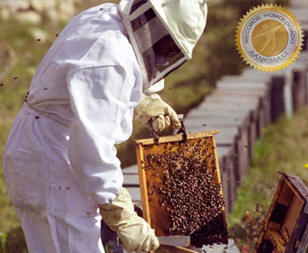Maior produtor de mel do país