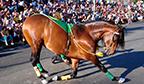 Cavalo com maior número de passos em duas patas