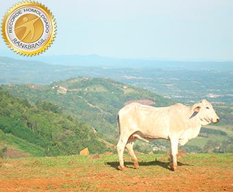 Maior valor adicionado por km² na produção rural