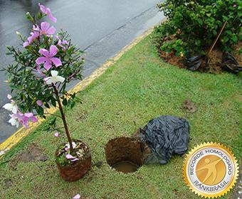 Maior plantio de árvores simultâneo