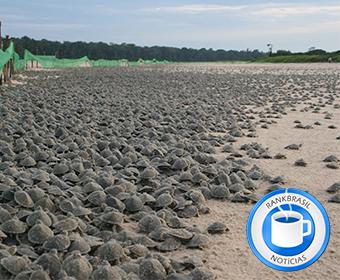 Chuvas fortes adiam soltura de tartarugas em Rondônia