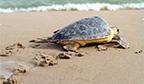 CURIOSIDADE – Tartarugas são lentas porque não precisam ser rápidas
