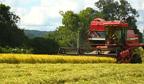 Brasil tem o melhor desempenho nas exportações do agronegócio