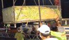 Caramujo vai fazer pamonha gigante para superar recorde