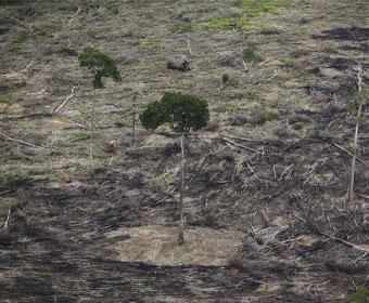 Campanha contra o novo Código Florestal tem mais de 1,5 milhão de adeptos