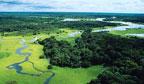Dia da Amazônia sugere consciência sobre preservação ambiental