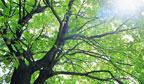 Dia da Árvore deve ser comemorado em respeito à natureza
