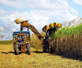 Maior produção de cana-de-açúcar da história do Brasil