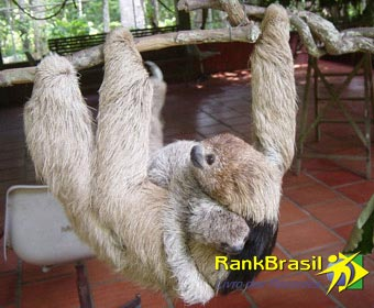 Menor cérebro do Brasil