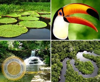Maior floresta tropical do mundo