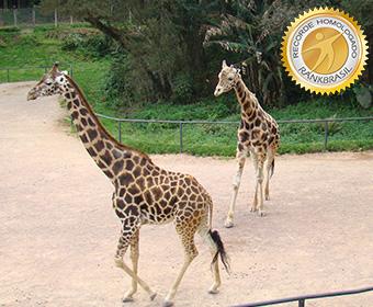 Animal mais alto do Brasil