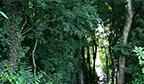 Maior campanha online pela sobrevivência das florestas