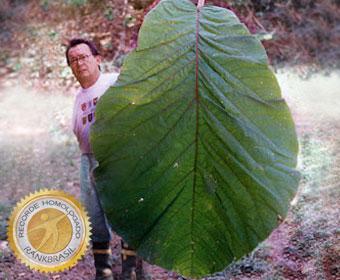 Maior folha do Brasil