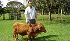 Menor touro adulto