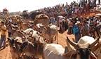 Maior desfile de carros de boi